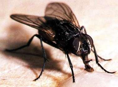20120615192147-mosca1.jpg